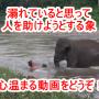 【生命の協調】溺れている人間を助けようとする象の動画です!人間と動物たちが協調して生きていける地球にしたいですね